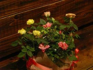 20101112flowers (3).JPG
